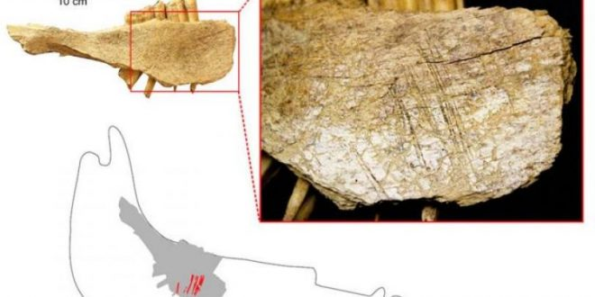 Humans Arrived in North America around 24000 Years Ago, Says New Research