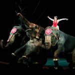 Ringling Bros. circus to close after more than 100 years