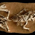 Some dinosaur eggs took three to six months to hatch, finds new research