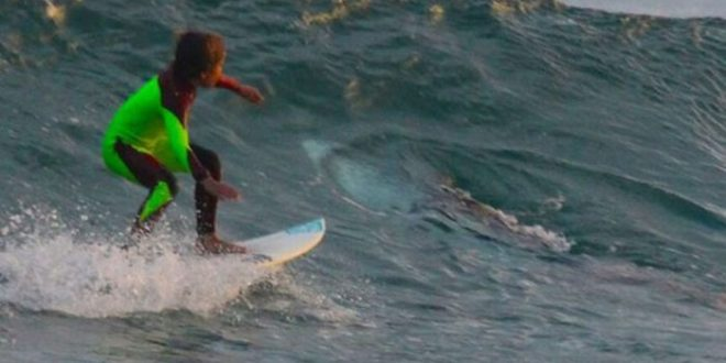 Young Australian surfer rides over great white. Dad captures the photo!