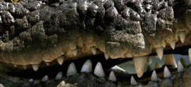 1609 crocodile skins seized in Guangxi; China