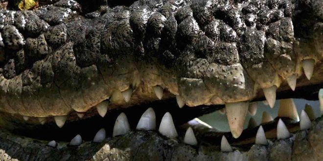 1609 crocodile skins seized in Guangxi; China
