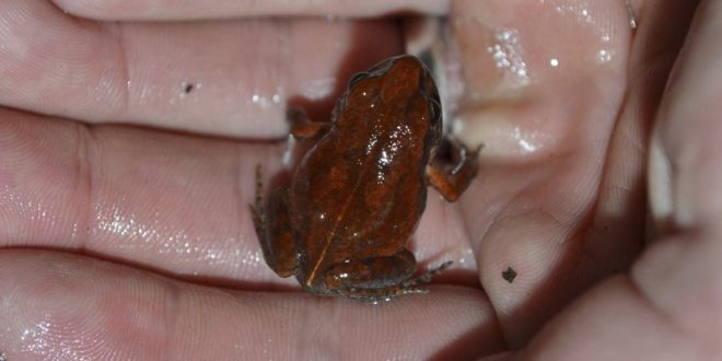 Cave Squeaker Frog Seen for the First Time in More Than 50 Years
