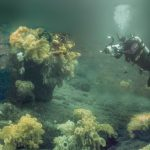 Fisheries minister to announce protection for Northern BC glass sponge reefs