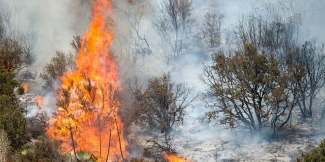 Humans Cause Most of America's Wildfires, Says New Study