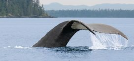 New BC mariner's guide aims to keep at-risk species safe
