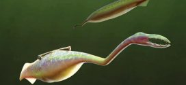 Underwater Alien With Mysterious Origin Baffles Researchers (Photo)