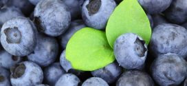 Blueberry linked to improved brain function in older people, says new study