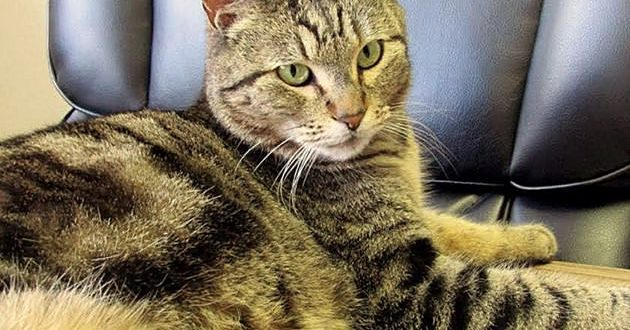 Cat disappears in California, turns up in Canada four years later