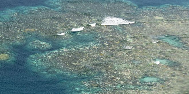 Great Barrier Reef suffers another year of mass bleaching, Report