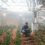 Life On Mars: Astronauts Can Grow Potatoes in Martian Soil