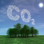 Research questions trees' ability to store carbon
