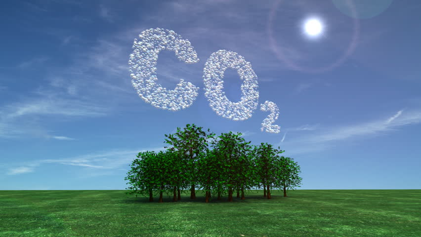 Reforestation carbon dioxide and forest