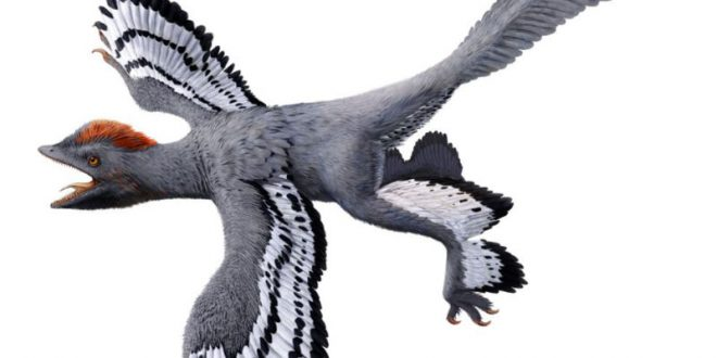 Researchers Have Created The Most Accurate Ever View Of A Dinosaur (Video)