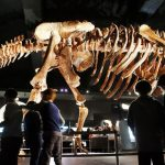 Researchers has re-written 130 years of dinosaur history