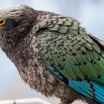 Scientists say parrots join each other in laughter
