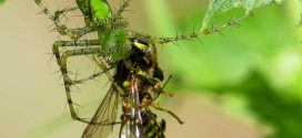Spiders eat 400-800 million tons of prey every year, says new research
