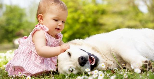 Pet germs can keep your baby healthy, Says New Study