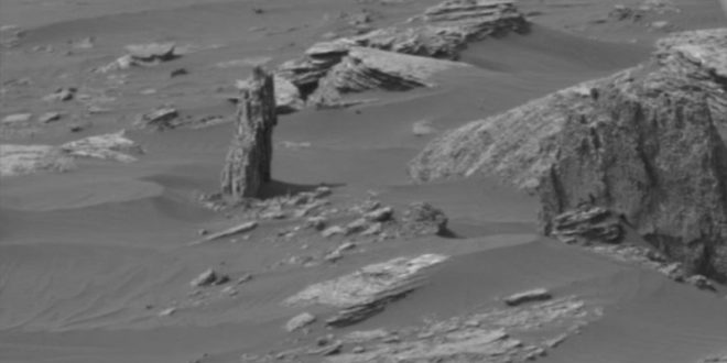 "Tree spotted on Mars, claims alien hunter ""Video"""