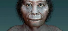 Researchers debunk theory that hobbits were man's cousin