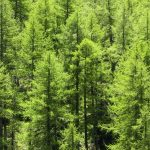 Tree trunks found to emit methane, says new research