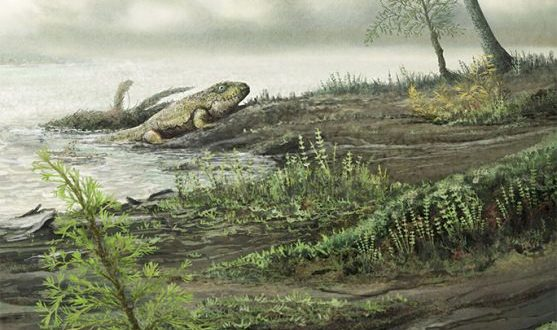 Antibiotic-resistant microbes evolved prior to dinosaurs, says new study