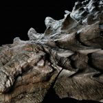 Archeologists found a dinosaur that still has its skin and guts