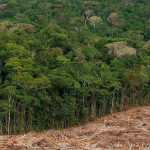 Deforestation may lead to mass extinction of species, Australian research