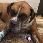 Dog found beaten, buried alive in Quebec: SPCA says