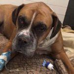 Dog found beaten, buried alive in Quebec: SPCA says