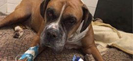 Dog found beaten, buried alive in Quebec; SPCA says