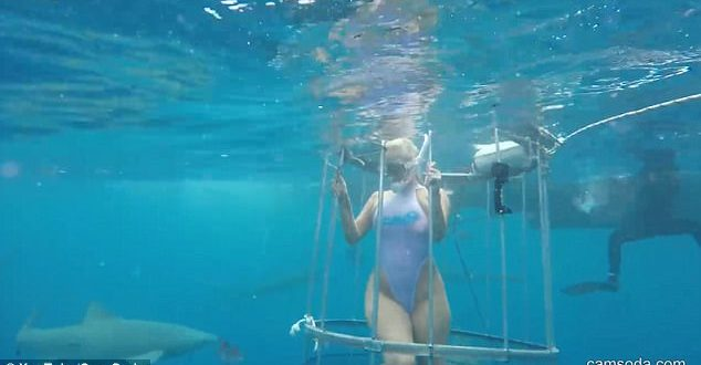 Porn Star attacked by shark during Florida film shoot (Video)