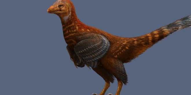Research delves into why flightless dinosaur had feathers