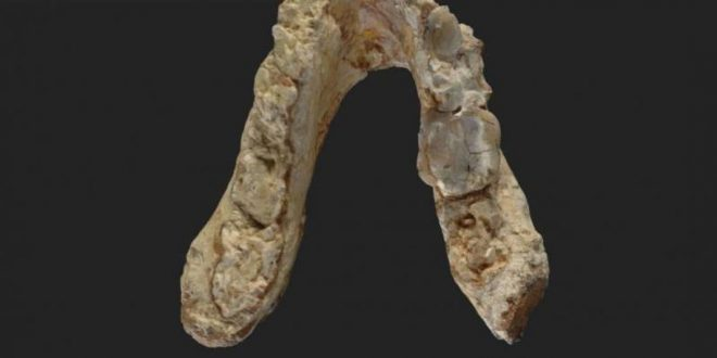 Researchers find 7.2-million-year-old pre-human remains in the Balkans