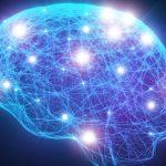 Researchers identify FORTY new 'intelligence genes'
