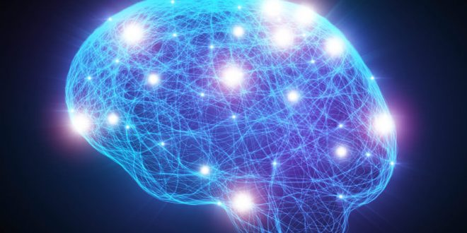 Researchers identify FORTY new 'intelligence genes'
