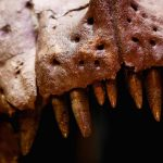 Scientists Reveal Just How Powerful The Tyrannosaurus Rex Bite Really Was