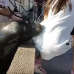 Sea Lion Pulls Girl from Pier, Drags Her Underwater (Watch)