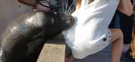 "Sea Lion Pulls Girl from Pier, Drags Her Underwater ""Watch"""