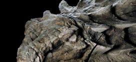 Statuesque dinosaur fossil unveiled in Alberta