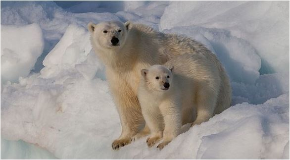 Supreme Court will not hear the so-called polar bear appeal, Report