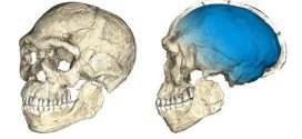 300000-Year-Old Homo Sapiens Fossils Uncovered in Morocco