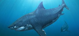 Scientists identify extinction event among marine megafauna