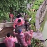 Shocking Video: Live donkey thrown to feed tigers in Chinese zoo