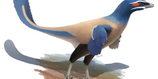 """Albertavenator curriei"" New species of bird-like dinosaur discovered"
