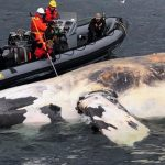 Joe Howlett: Canadian Fisherman Killed by Whale He Rescued