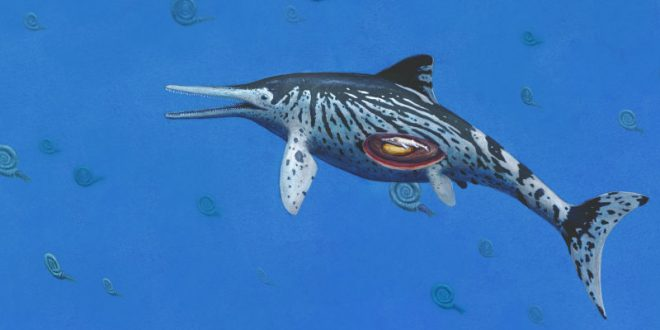 Largest Ichthyosaurus was pregnant at time of death, says new research