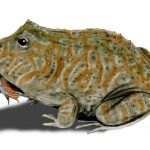 Beelzebufo: Giant frogs capable of eating dinosaurs