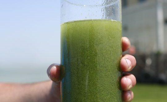 Blue-green Algae (Cyanobacteria) bloom advisory issued for Lac Bellevue