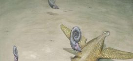 New Giant Necked Sea Monster Identified In Germany